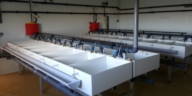 Temperaturkontrolle für Austernlaich, Firma SATMAR