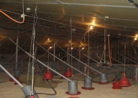 Erdwärmetauscher unter strohausgelegter Fläche in einer Rinderzuchtfarm